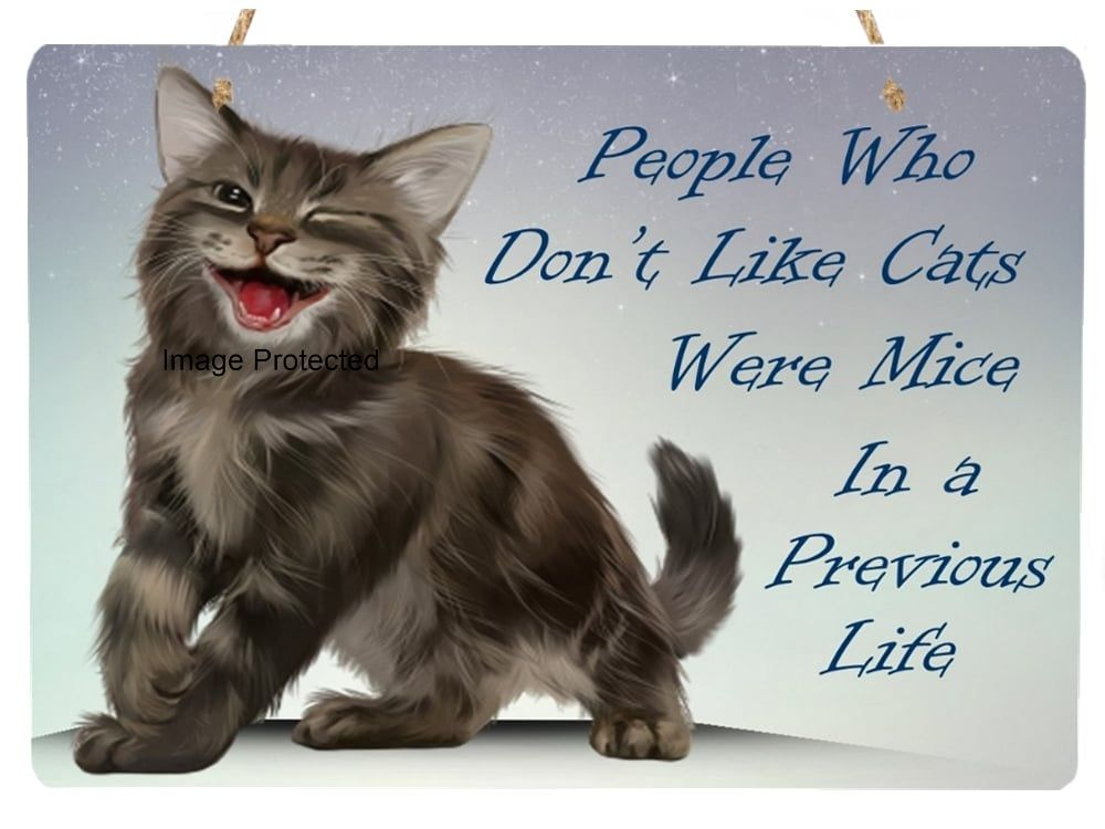 Chester Kitten - People Who Don't Like Cats