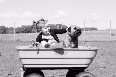 Toddler with dog in wheelbarrow