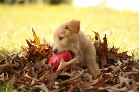 Puppy playing in leaves