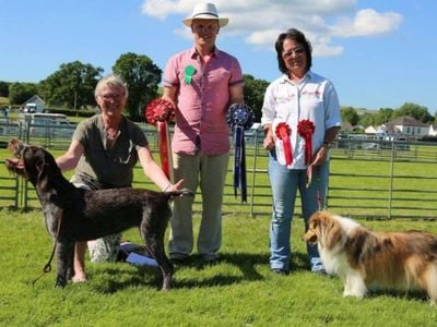 Family Dog Championship Winner Sponsored By TP Feeds