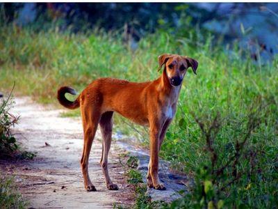 Street Dog Abroad