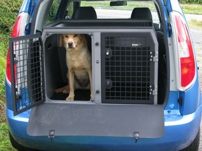 Labrador in a dog travel box