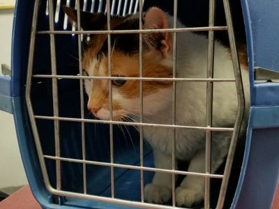 Cat travelling safely in a carrier