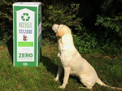 Eira the Labrador looking at the recycling box