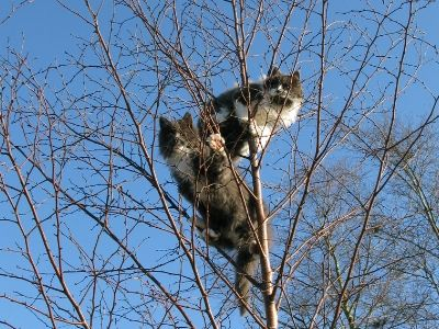 The two cats keeping lookout in a tree