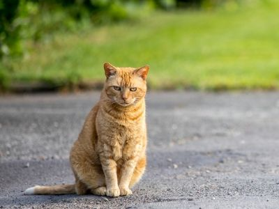Ginger cat sat in the road