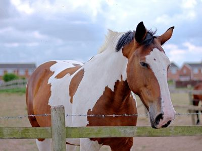 Horse stood in a field