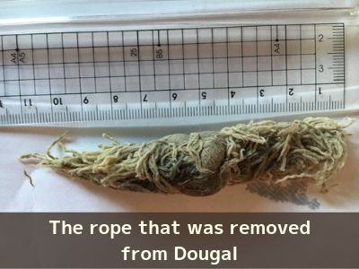 The rope removed from Dougal