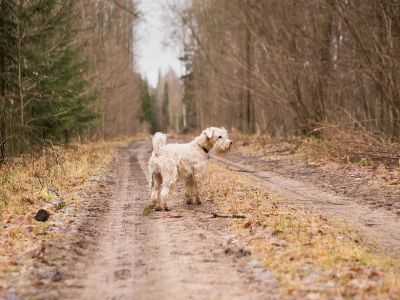 Dog on a woodland walk