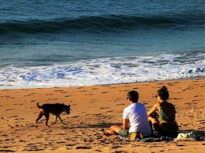 Couple on the beach with dog