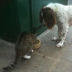 Monty the cat and Bruce the spaniel