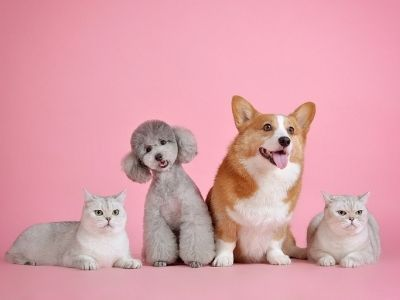Dogs and cats on pink background