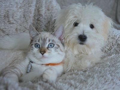 Dog and cat cuddled on sofa