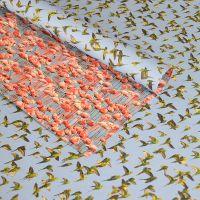 Flamingos and Parakeets
