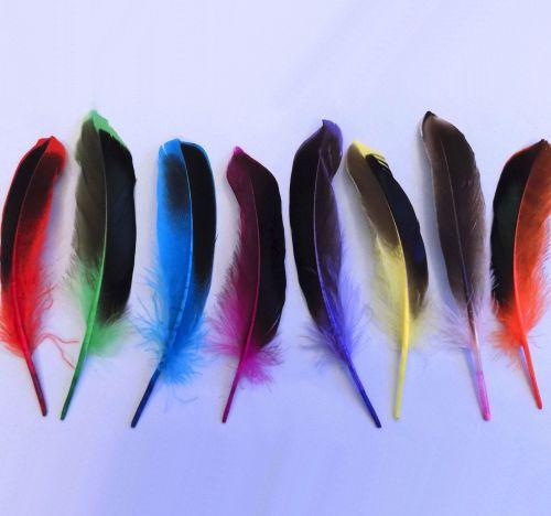 Dyed Mallard Duck Wing Feathers x 10