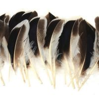 Natural Mallard Duck Wing Feathers x 10