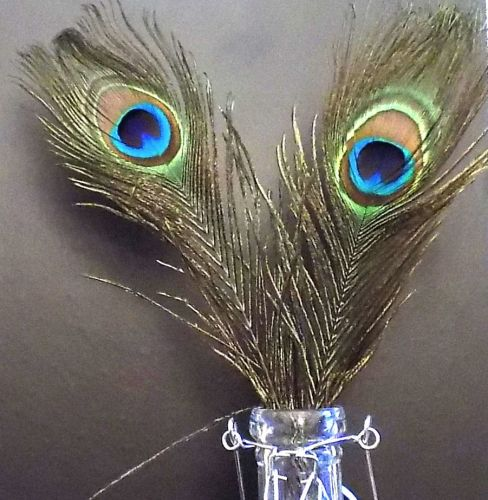 Peacock eye tail feathers Premium Quality x 5
