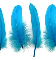 Aqua Blue Goose Quill Feathers x 4
