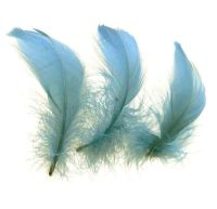 Country Blue Goose Coquille Feathers x 25
