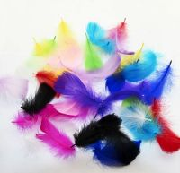 Goose Coquille Feathers Assorted x 25