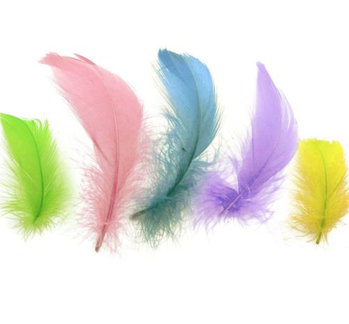 Goose Coquille Feathers Spring Pastels x 50
