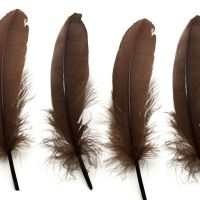 Brown Goose Quill Feathers x 4