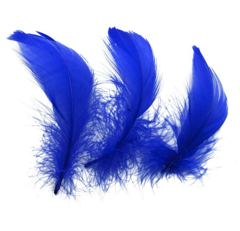 Royal Blue Goose Coquille Feathers x 25