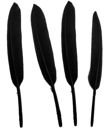 Black Goose Quill Feathers x 10