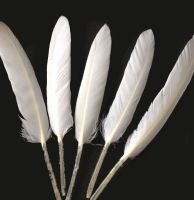 White Goose Quill Feathers x 10