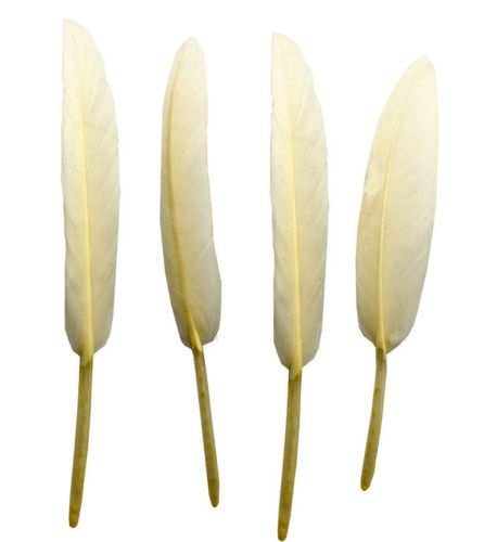 Ivory Goose Quill Feathers x 10