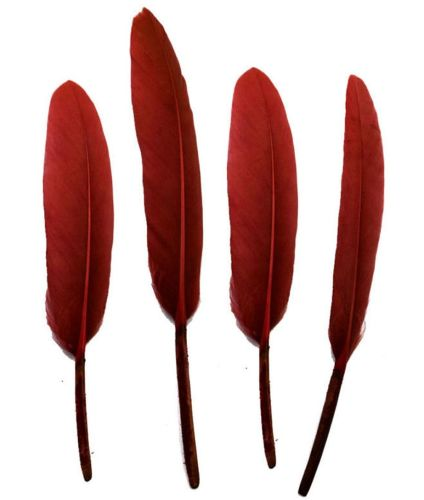 Burgundy Goose Quill Feathers x 10