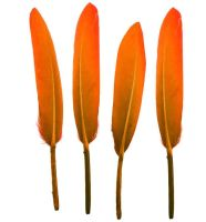 Orange Goose Quill Feathers x 10