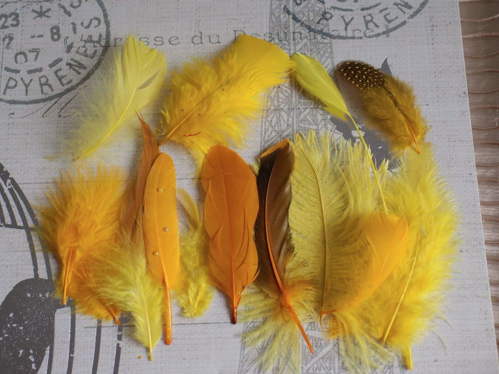 Yellow Selected Popular Feathers x 12