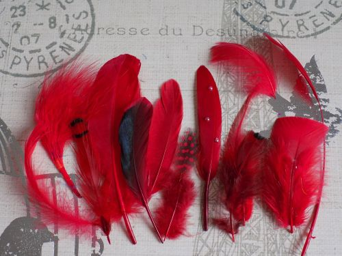 Red Selected Popular Feathers x 12