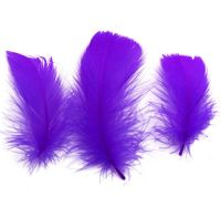 Purple Goose Coquille Feathers x 25