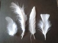 White Feathers Assorted Styles