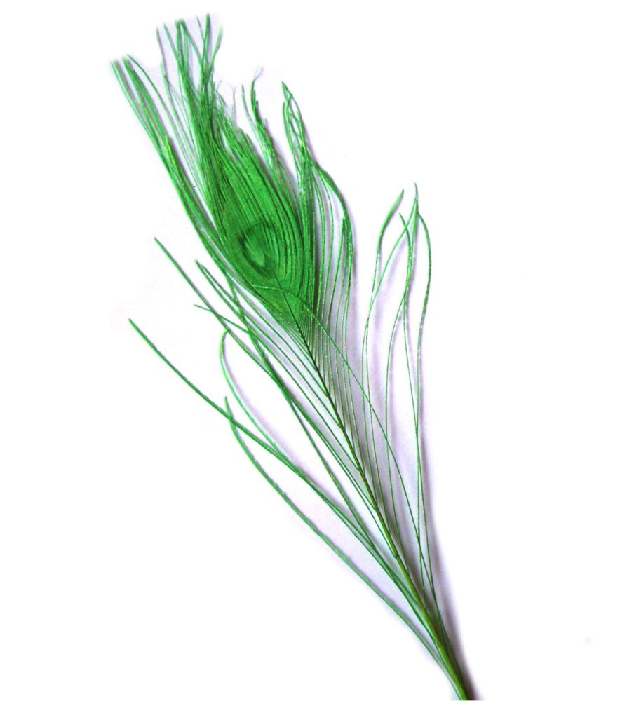 Lime Green Peacock Eye Tail Feather