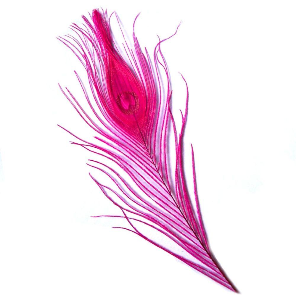 Dark Pink Peacock Eye Tail Feather