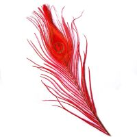 Red Peacock Eye Tail Feather