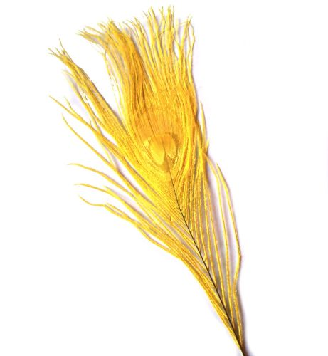 Yellow Peacock Eye Tail Feather