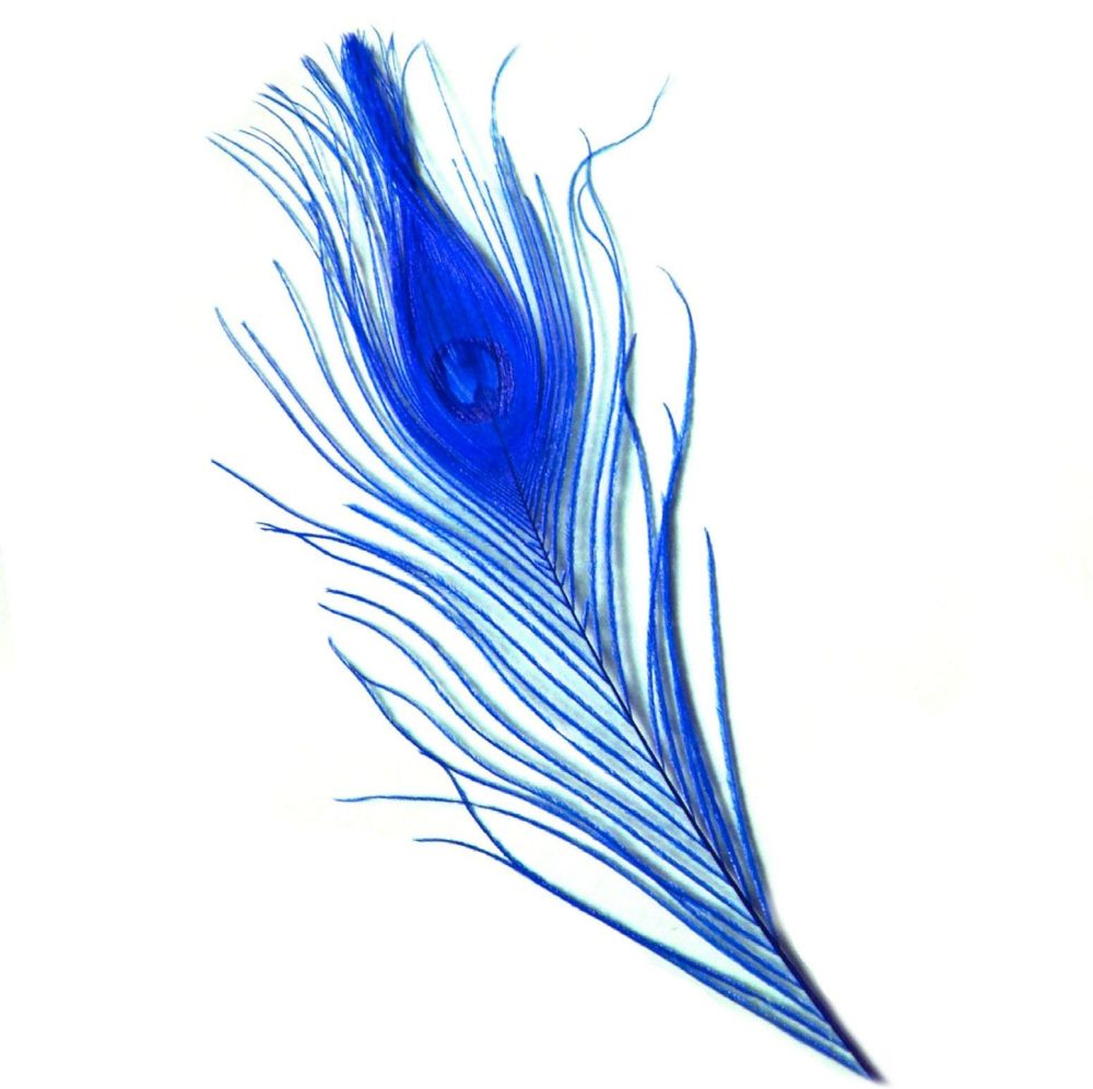 Royal Blue Peacock Eye Tail Feather