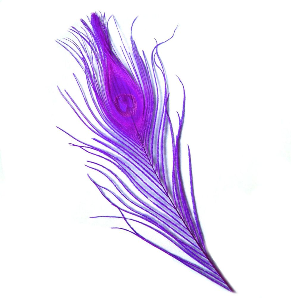 Plum Purple Peacock Eye Tail Feather