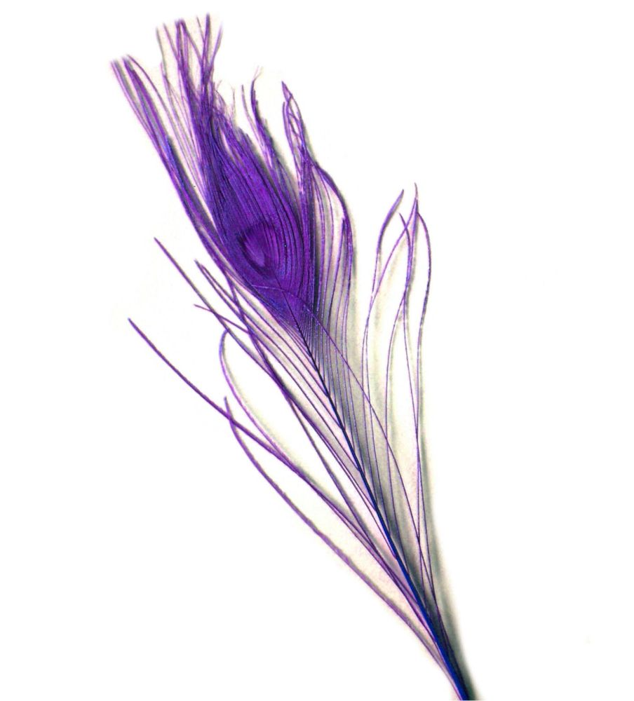 Purple Peacock Eye Tail Feather