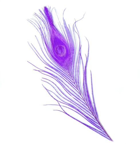 Lilac Peacock Eye Tail Feather