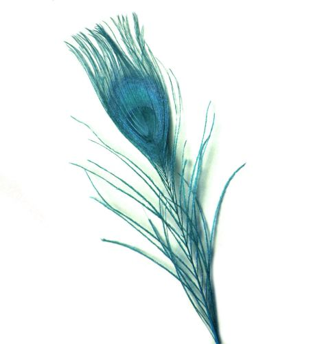 Aqua Blue Peacock Eye Tail Feather