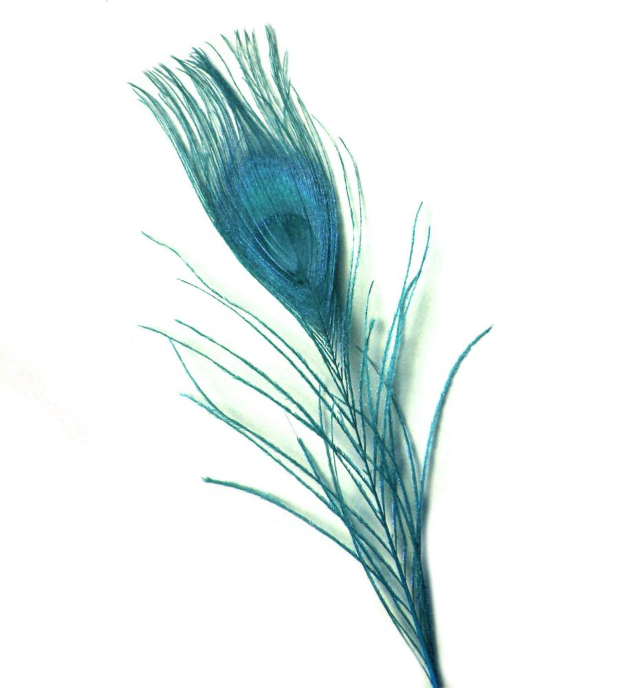 Aqua Blue Peacock Eye Tail Feather