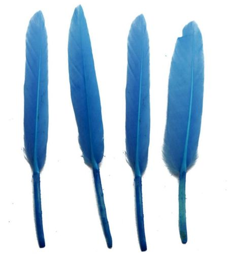 Cornflower Blue Goose Quill Feathers x 10
