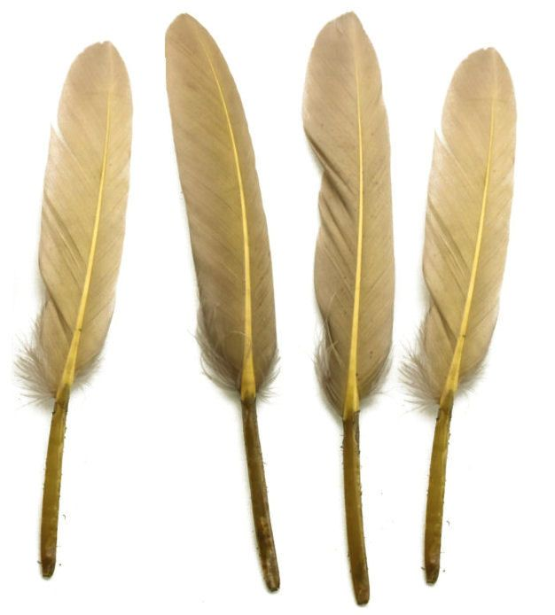Camel Goose Quill Feathers x 10