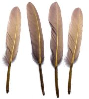 Cappucino Goose Quill Feathers x 10