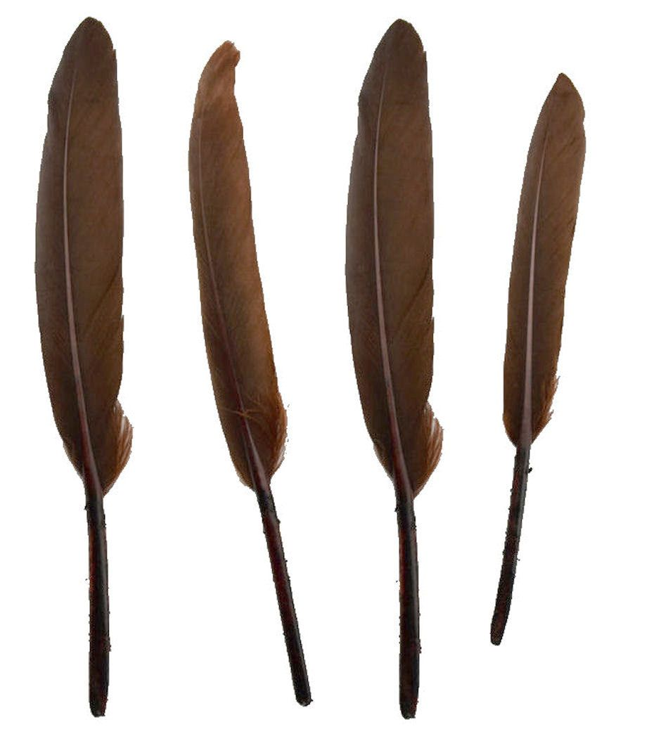 Brown Goose Quill Feathers x 10